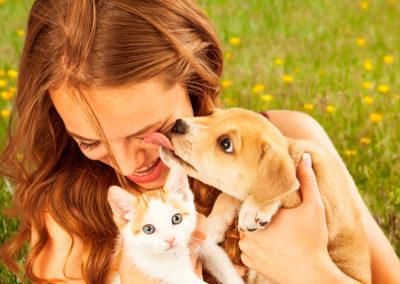 Sesión de asesoramiento para escoger el mejor compañero animal