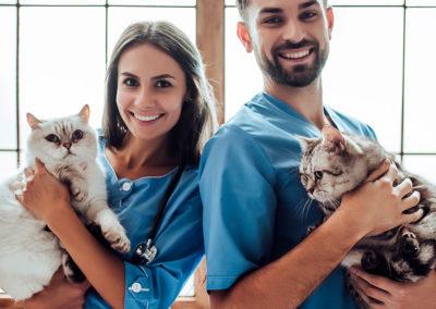 Servicios a veterinarios