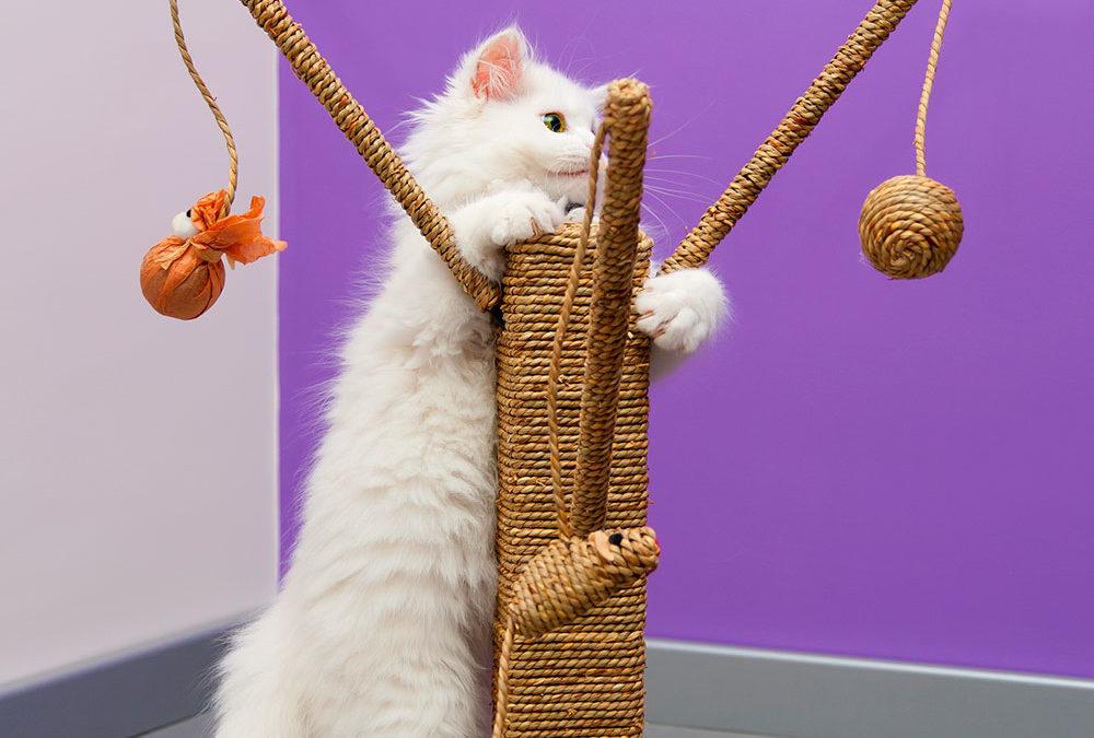 satisfacer necesidades gatos blog etholink