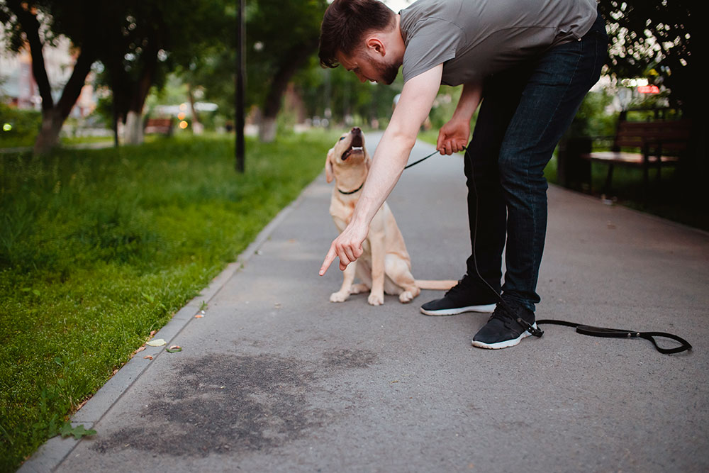 eliminacion inadecuada perros etholink