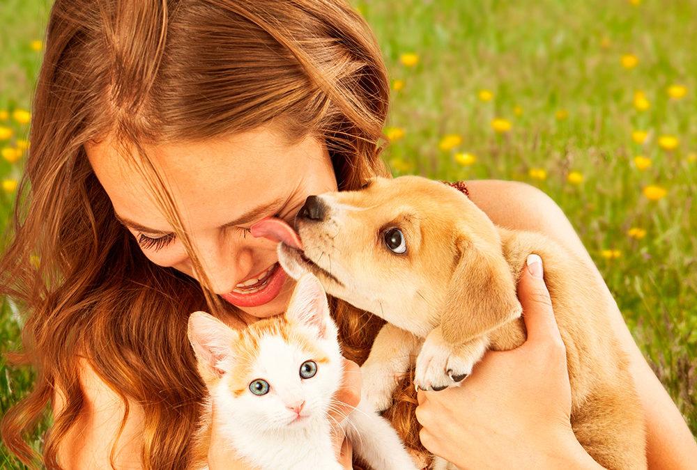 Com escollir el millor company animal