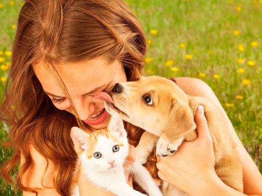 Sessió d'assessorament per escollir al millor company animal