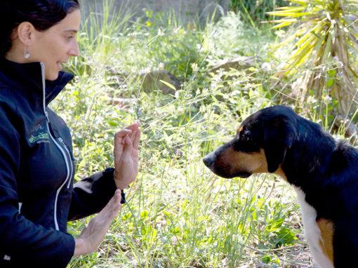 Modificació de conducta de gossos i gats