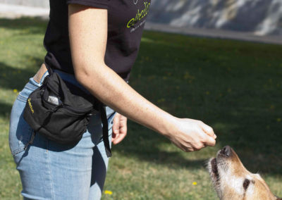 Educació canina i obediència bàsica del gos adult
