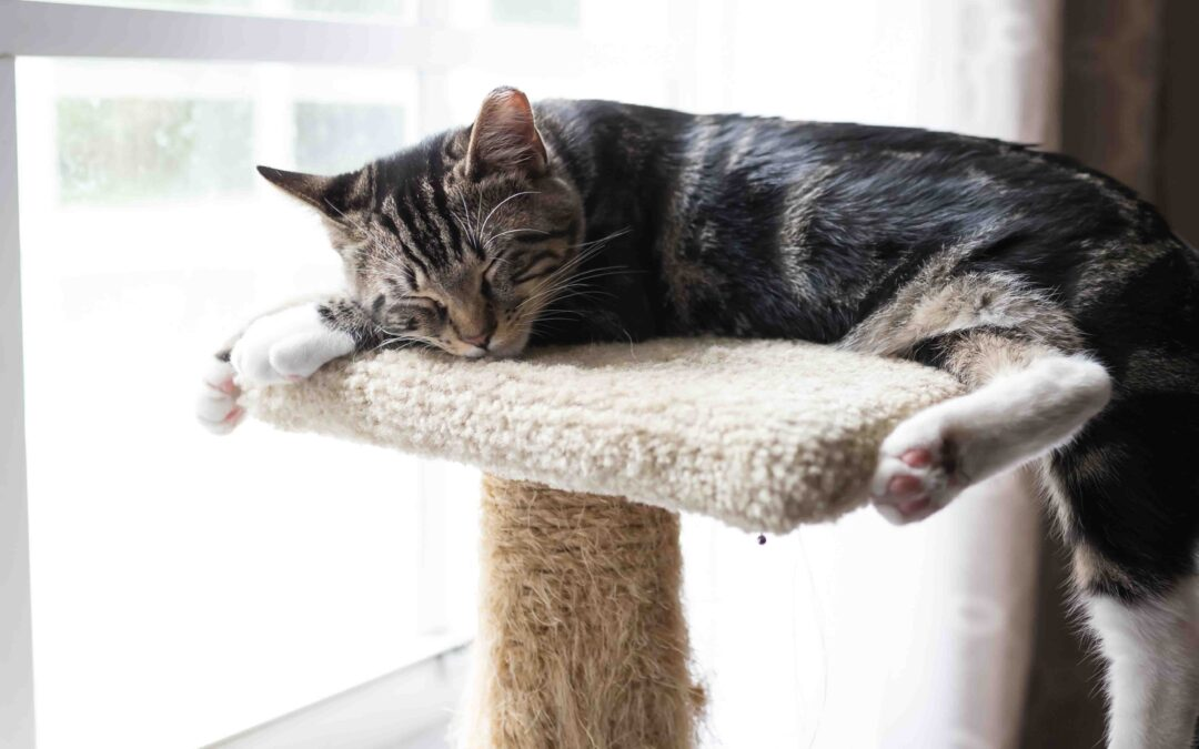 Per què el meu gat no em deixa dormir?