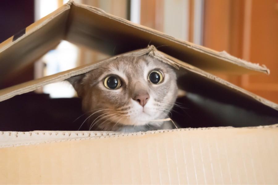 Al teu gat li estressa el confinament?