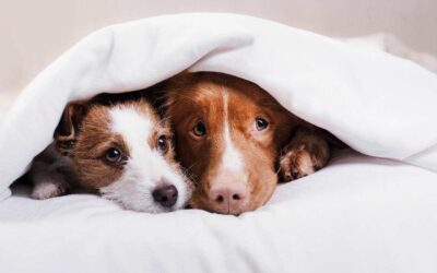 Com ajudar al teu gos en la nit de Sant Joan?
