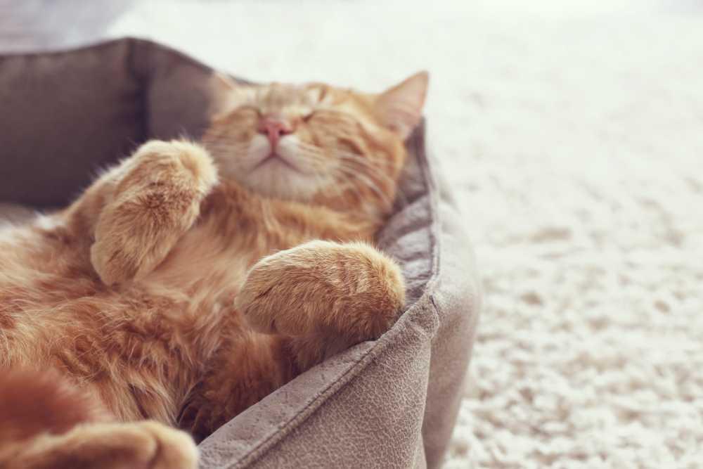 Las 7 claves para que tu gato viva en un entorno perfecto
