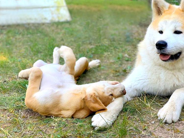 Por qué es tan importante la socialización de tu cachorro