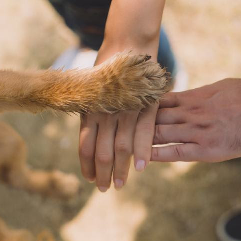 Campaigns to improve animal welfare