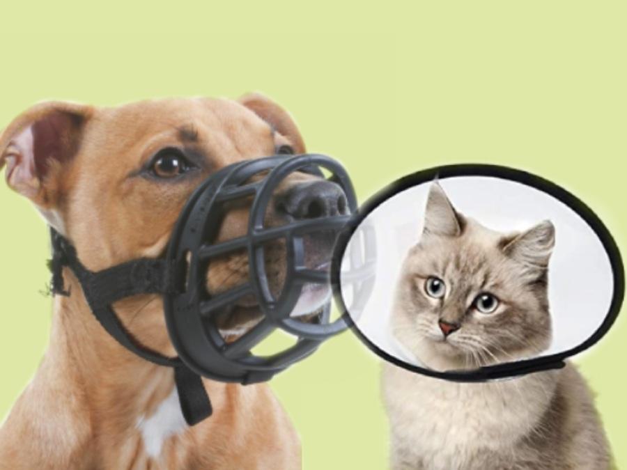 ¿Cómo habituar a tu perro o gato al bozalm corte de uñas, collar isabelino...? Blog Etholink Etología Veterinaria